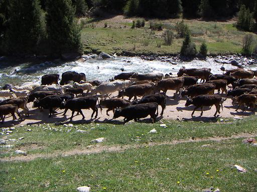 Rush Hour in Kyrgyzstan